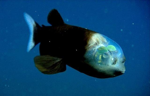 深海生物-1.jpg