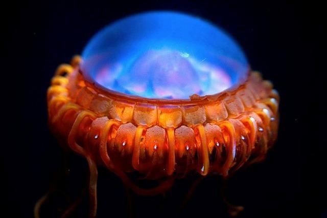 深海生物-12.jpg
