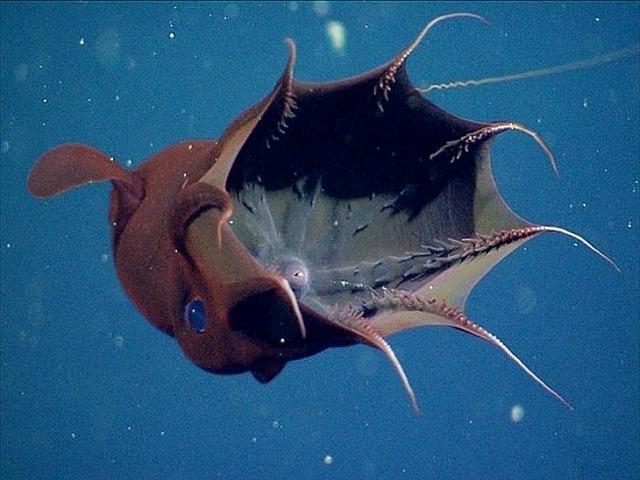 深海生物-26.jpg