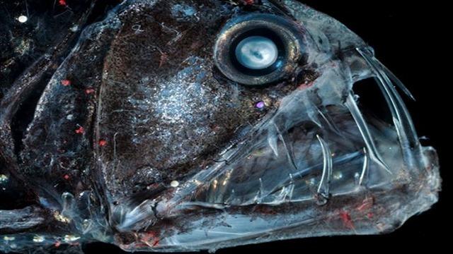 深海生物-35.jpg